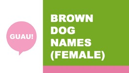 Female names for brown dog - the best names for your pet