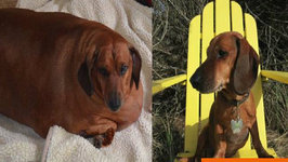 Former Fat Dog Slims Down and Poses for 2015 Hot Dog Calendar