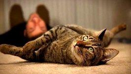 Upside Down Kitties - Mean Kitty