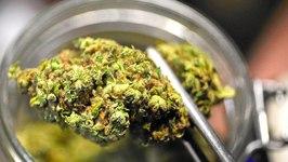 Marijuana Cash Floods IRS Offices