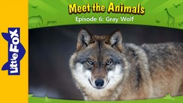 Meet the Animals 6 - Gray Wolf - Animated Stories by Little Fox