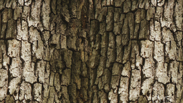 Why Do Trees Have Bark?