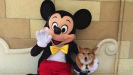 Adorable Pictures of Corgis at Disney Sweep the Internet