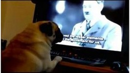 Nazi Dog Training Video Gets Man Arrested