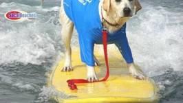 Dog Beach -In HD