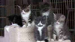 Kittens Watch Dog Fight -in HD