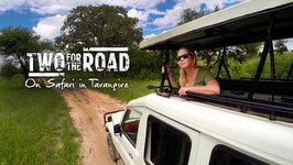 Sex, Warthogs And Thievery On Safari In Tarangire