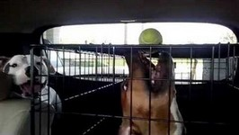 Dog Tries To Bite A Ball On Top Of Its Cage