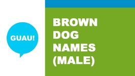 Male names for brown dog - the best names for your pet