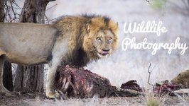 Wildlife Photography - The Day in the Life of a Wildlife Photographer