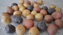 How To Prepare Seeding Potatoes for Planting: Kitchen Gardening With Kimberly