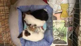 Cute puppy sleeps through siblings wrestling