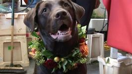 How To Decorate A Floral Dog Collar