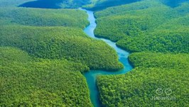 Which Is The Largest Rainforest In The World?