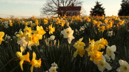 How To Add Style To Your Garden With Spring Flowering Bulbs