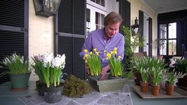 How To Make A Spring Flowering Bulb Gift Basket