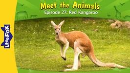 Meet the Animals 27 - Red Kangaroo - Level 2
