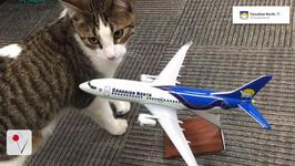 Canadian Airlines Save Pets From Devastating Fire