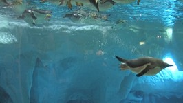 Penguins, Sea World, Gold Coast, Queensland, Australia