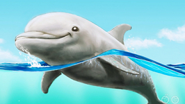 What Is A Dolphin?