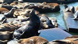 Visiting the Sea Lions at Pier 39