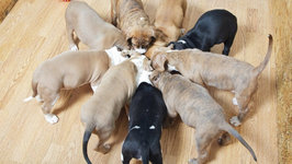 Cute Puppies Go Crazy For Food