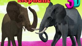 Finger Family Elephant Family Rhymes  Animals Cartoon Finger Family Rhymes for Children