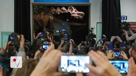 Biggest Dinosaur Ever Now Calls New York City Home