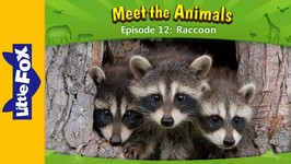 Meet the Animals 12 - Raccoon - Animated Stories by Little Fox