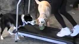 Incredible Dogs Play Treadmill Fetch- PetTube