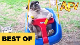 Funny Animal Videos - Over 13 Minutes Of Hilarious And Cute Animal Moments